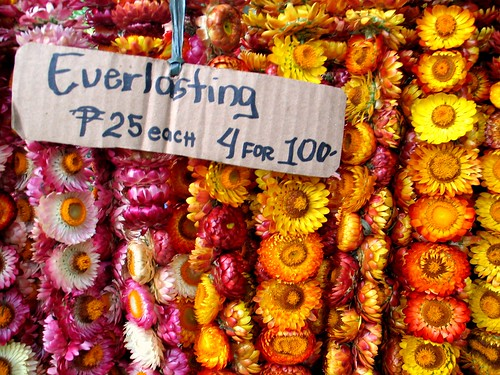 Everlasting Garlands - Baguio City