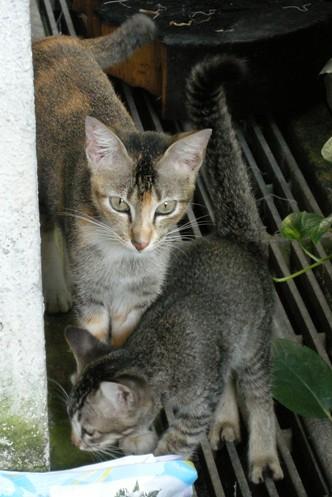 Bambi_BambiBaby_crouching_20081122_04x