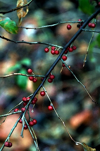 The Beauty of Berries
