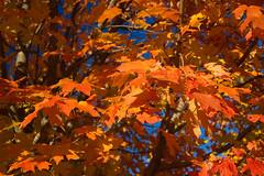 Autumn in Baltimore