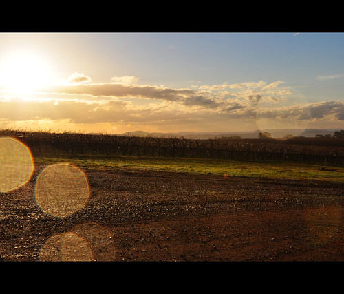 Vineyard Sunburst
