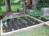 My Backyard Vegetable Garden