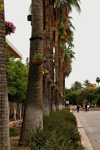palmsonmall