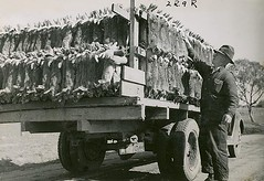 Rabbit trapping by State Records NSW