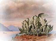 René Magritte. La isla del tesoro, 1942.