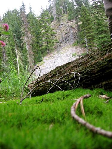 Louise Creek Trail