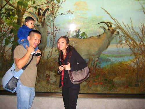 Then we went to the Hall of Africa where Goo-Goo was impressed by the size of this antelope