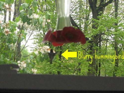Blurry hummingbird