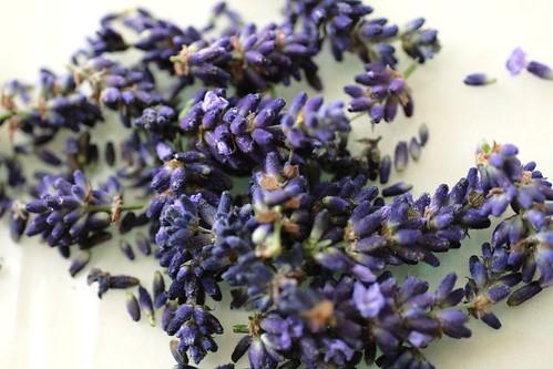 lavender florets