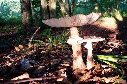 Mushroom Life