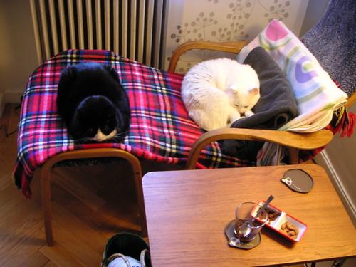 lazy sunday cats