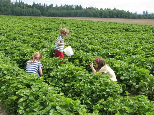 Picking Berries