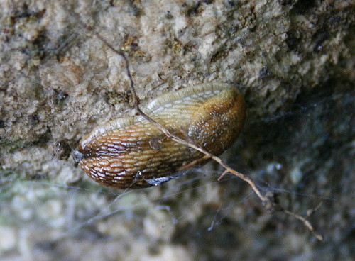 Slug for International Rock-flipping Day