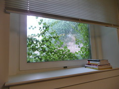 Office window with vine and rain