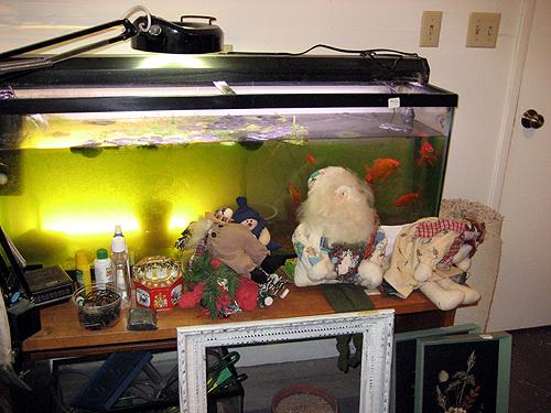 Live fish at estate sale