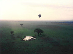 Serengeti Hot Air Balloon, MyLastBite.com
