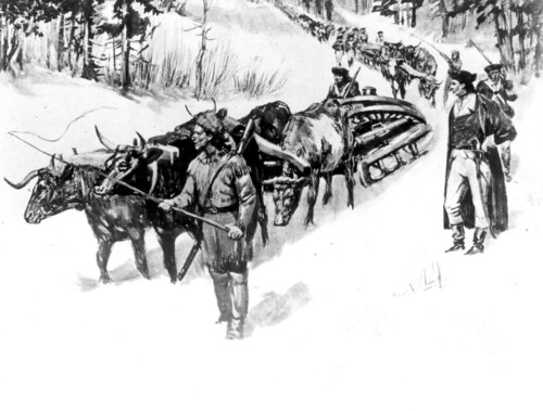 Ox team pulling guns