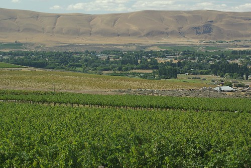 Tapteil Winery