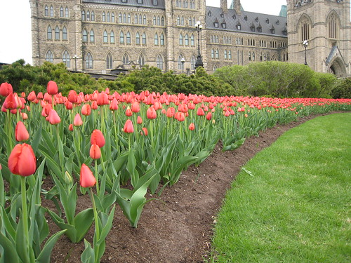 Parliament Hill's flowerbed