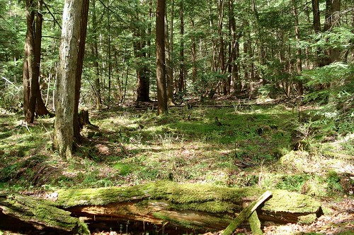 Forest around the Bog