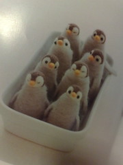 A box of  Wool Penguins!