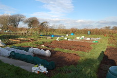 081214-allotment004