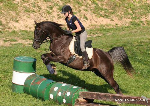 Katatjutas Greyhounds, Pferde & Joey