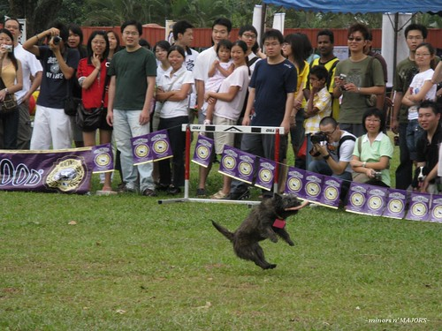 DogathonUPM200846