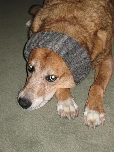 Bruno in headband