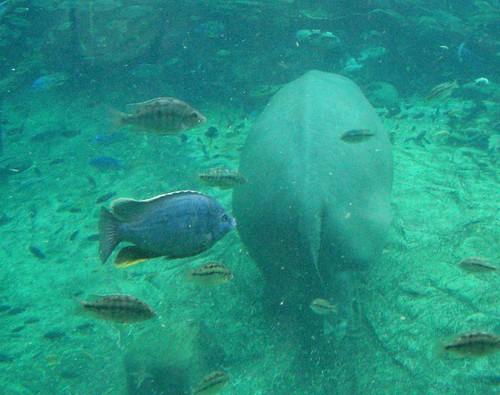 Hippo butt!