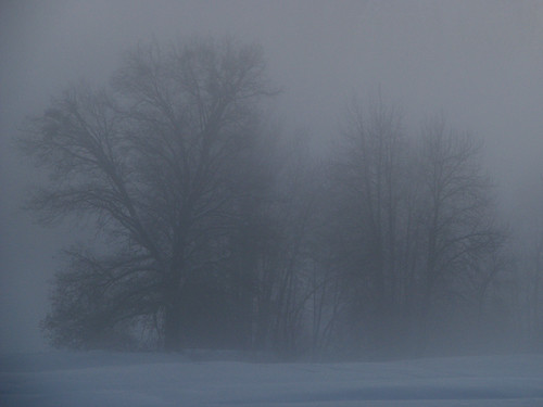 Day 04 - Trees In The Mist