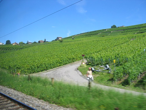Vineyards through the train window, Switzerland