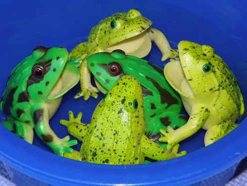 frogs 007