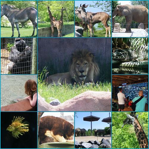 Toronto Zoo Mosaic
