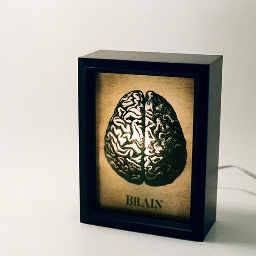 brain 1