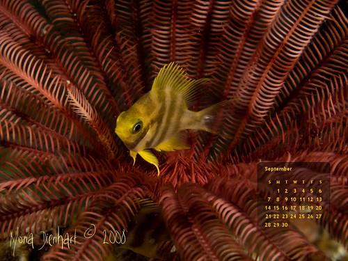 Red crinoid hide away