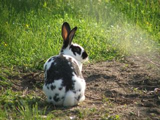 DSCF6023 5 kilo konijn