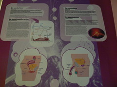 The Menstrual Cycle and Sperm Factory