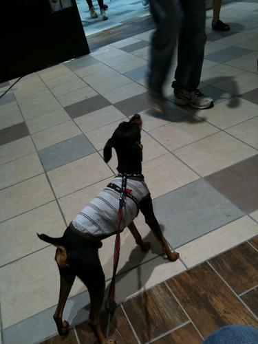 黒犬もいきかう人を見上げております。
