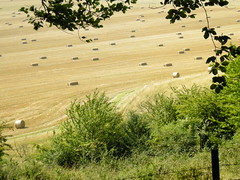 Fields in late summer