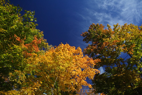 Foliage - Polarizing Filter