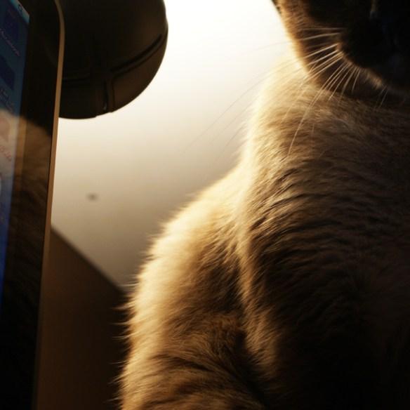 #123 - Big kitty