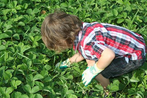 nehe_picking_berries