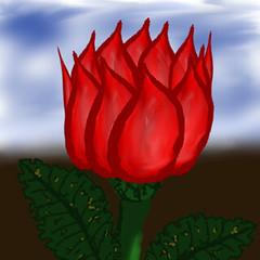 rose-012