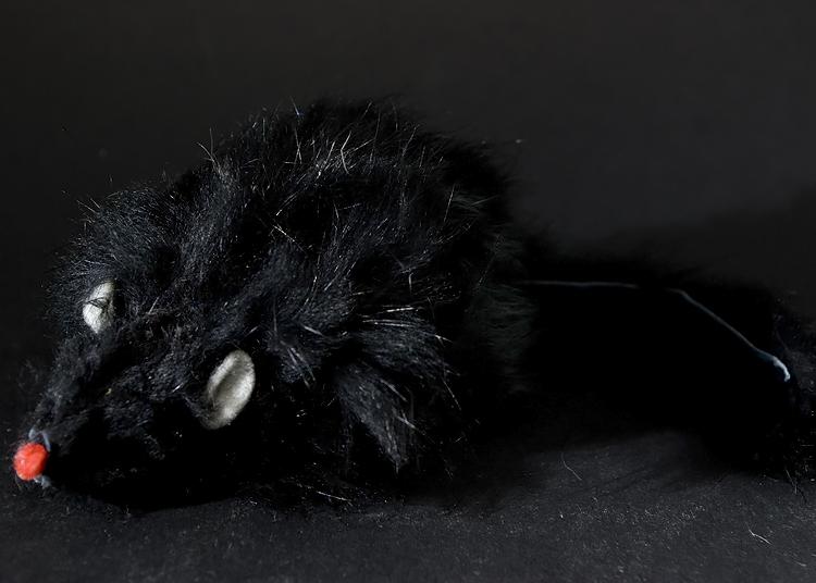 schwarze maus