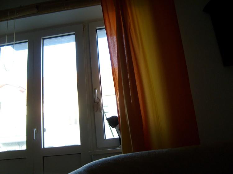 Moritz Day # 55 / 365 28. April 2008