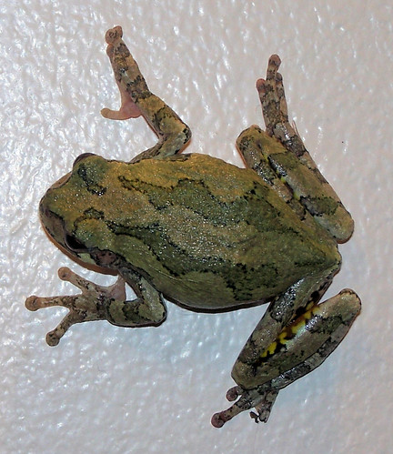froggy on wall.jpg