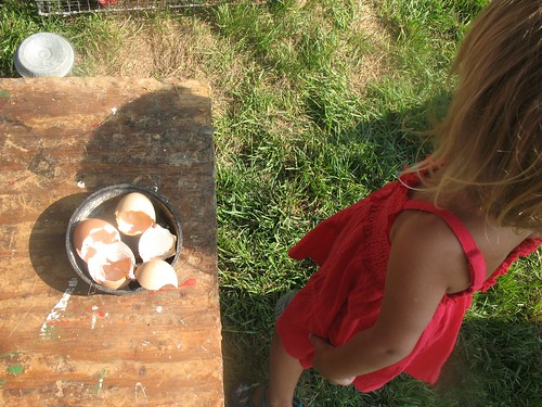 day on the farm...freshly hatched chick eggs by you.