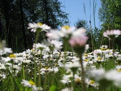 Bear Creek Park May 24 2008 070