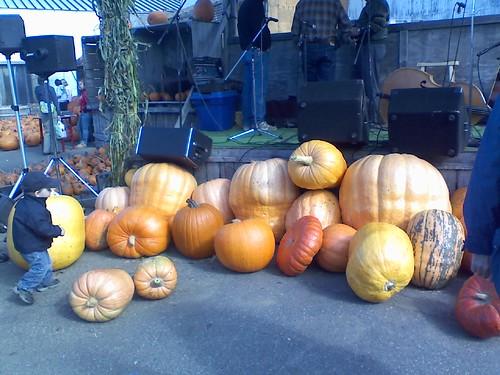 huge pumpkins!